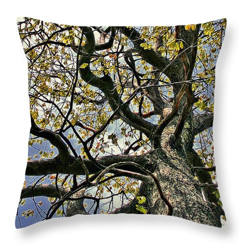 Maine Throw Pillow featuring the photograph Cemetery Oak by Laura Mace Rand
