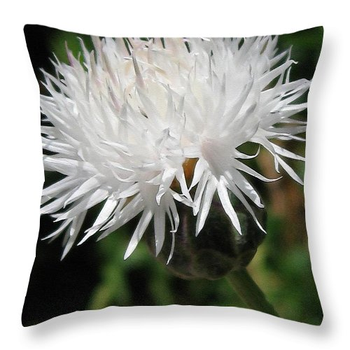Centaurea Throw Pillow featuring the painting Centaurea Named The Bride by J McCombie