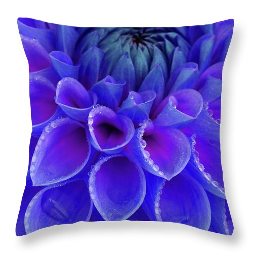 Haslemere Throw Pillow featuring the photograph Centre Of Blue And Purple Dahlia Flower by Rosemary Calvert