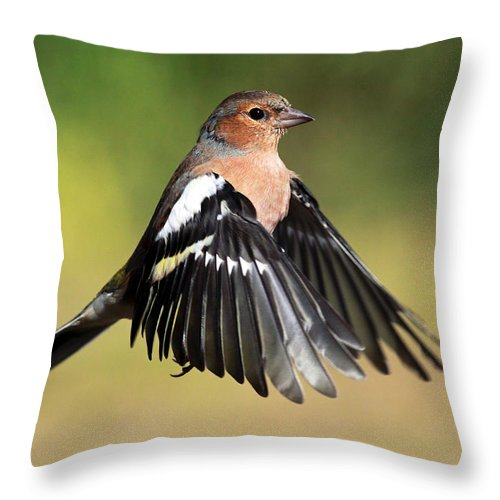 Chaffinch Throw Pillow featuring the photograph Chaffinch In Flight by Grant Glendinning