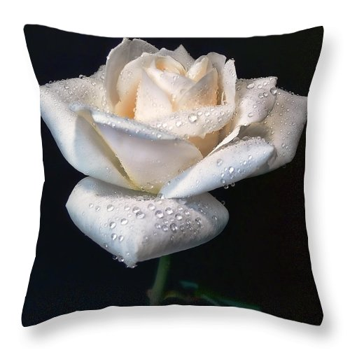 Rose Throw Pillow featuring the photograph Champagne Rose Flower Macro by Jennie Marie Schell