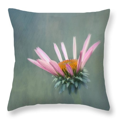Flower Throw Pillow featuring the photograph Change by Kim Hojnacki