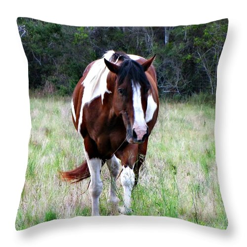 Paint Horse Throw Pillow featuring the photograph Charlie Charlie by Sherri McCollum