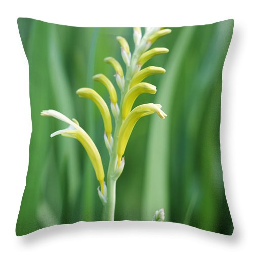 Chasmanthe Aethiopica Throw Pillow featuring the photograph Chasmanthe by Neil Overy