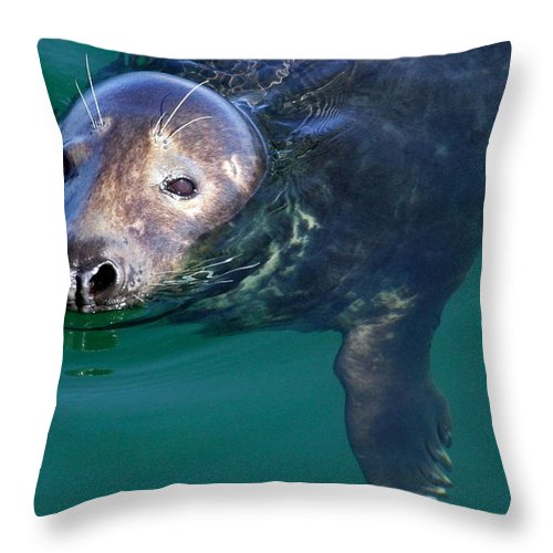 Seal Throw Pillow featuring the photograph Chatham Harbor Seal by Stuart Litoff