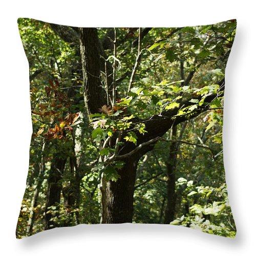 Autumn Leaves Throw Pillow featuring the photograph Chattahoochee Riverwalk by Rafael Salazar