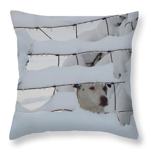 Fence Throw Pillow featuring the photograph Checking On The Neighbors by Karen Beasley