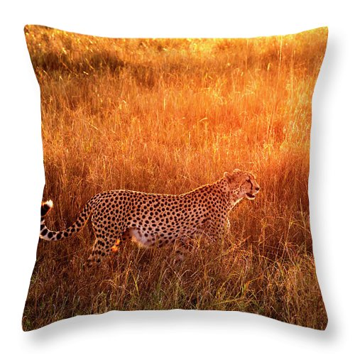 Scenics Throw Pillow featuring the photograph Cheetah In The Grass At Sunrise by Mike Hill