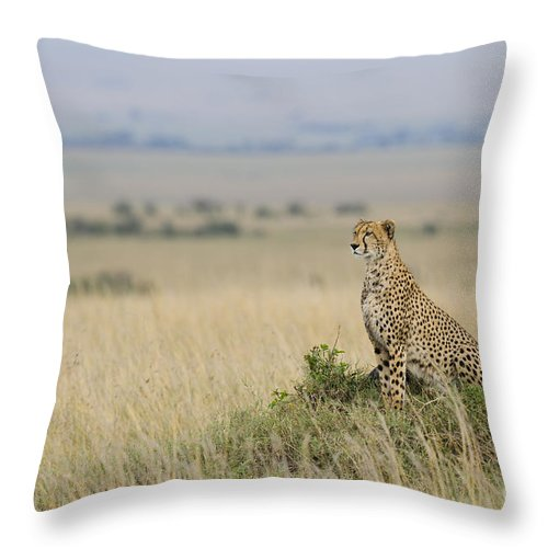Acinonyx Jubatus Throw Pillow featuring the photograph Cheetah Perched On A Mound by John Shaw