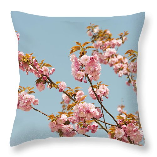 Asia Throw Pillow featuring the photograph Cherry Blossom by Jacek Malipan