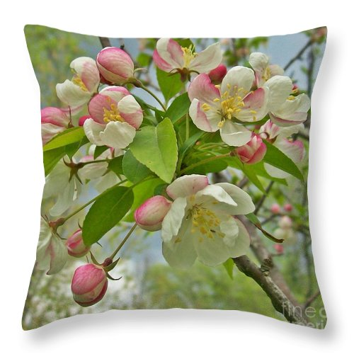 Autumn Cherry Throw Pillow featuring the photograph Cherry Blossoms by Sara Raber