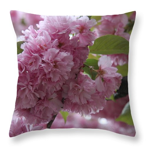 Cherry Tree Throw Pillow featuring the photograph Cherry Tree Blossoms by Christiane Schulze Art And Photography