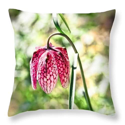 Turkey-eggs Throw Pillow featuring the photograph chess-flower in the gardens of Enkoping spring 2012 by Leif Sohlman
