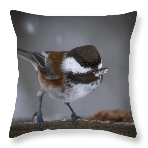 Jean Noren Throw Pillow featuring the photograph Chestnut Back Chickadee In Winter by Jean Noren