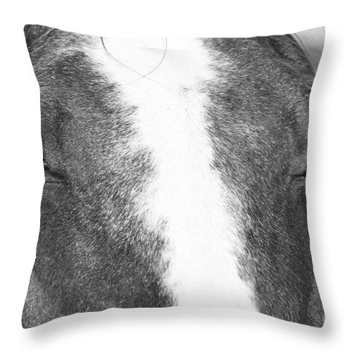 Photography Throw Pillow featuring the photograph Chestnut by Jackie Farnsworth