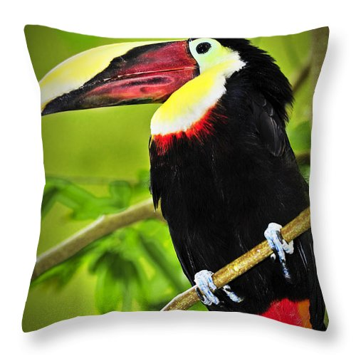 Chestnut Throw Pillow featuring the photograph Chestnut Mandibled Toucan by Elena Elisseeva
