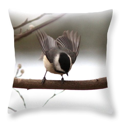 Chickadee Throw Pillow featuring the photograph Chickadee-img-1955-002 by Travis Truelove