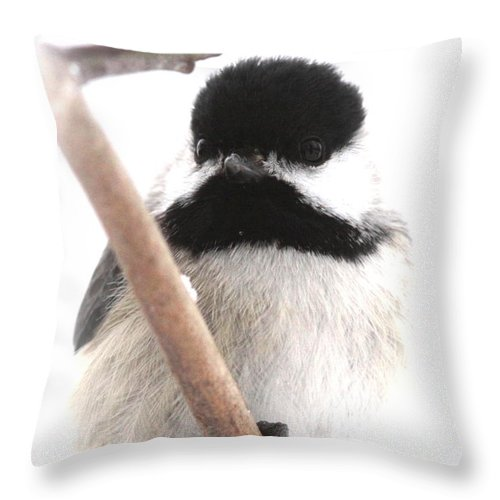 Chickadee Throw Pillow featuring the photograph Chickadee-img-2147-001 by Travis Truelove