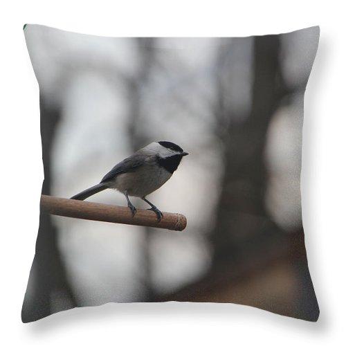 Bird Throw Pillow featuring the photograph Chickadee - Keeping Watch by Ericamaxine Price
