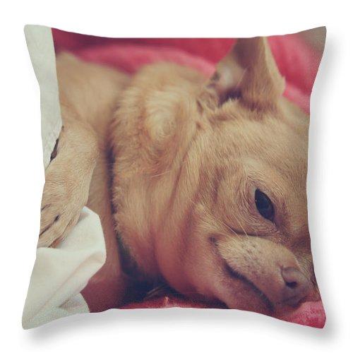 Chihuahuas Throw Pillow featuring the photograph Chillin by Laurie Search