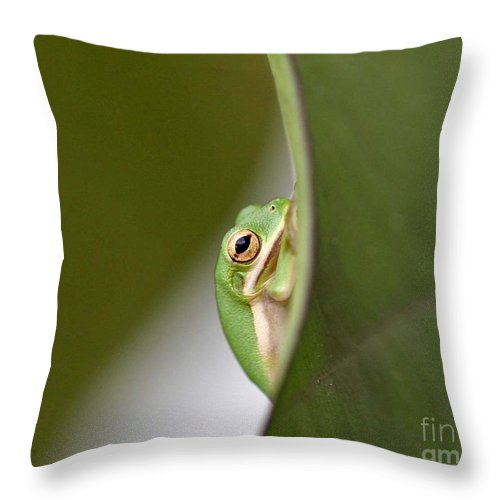 Nature Throw Pillow featuring the photograph Chillin by Scott Pellegrin