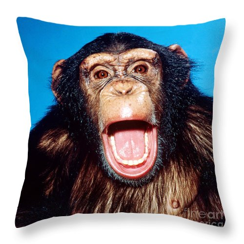 Animal Throw Pillow featuring the photograph Chimpanzee Portrait by Toni Angermayer