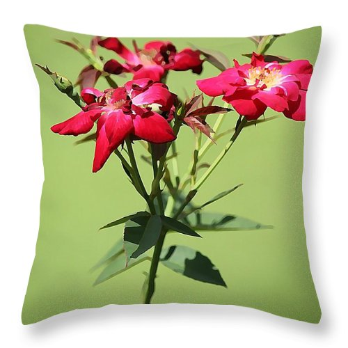 Rose Throw Pillow featuring the photograph China Rose by Jean Connor