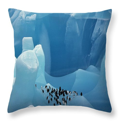 Penguin Throw Pillow featuring the photograph Chinstrap Penguins On Blue Iceberg by Bryan and Cherry Alexander