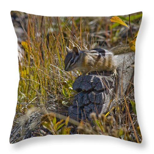 Chipmunk Throw Pillow featuring the photograph Chipmunk In Yellowstone by Crystal Heitzman Renskers