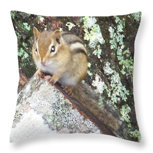 Chipmunk On A Log Throw Pillow featuring the photograph Chipmunk On A Log by Joseph Marquis