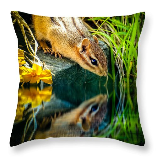 Chipmunk Throw Pillow featuring the photograph Chipmunk Reflection by Bob Orsillo