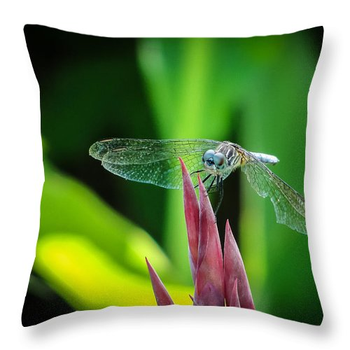 Dragonfly Throw Pillow featuring the photograph Chomped Wing by TK Goforth