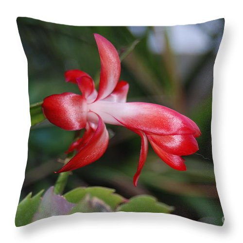 Christmas Throw Pillow featuring the photograph Christmas Cactus by Mark McReynolds
