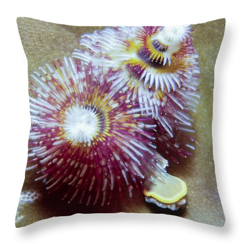 Micronesia Throw Pillow featuring the photograph Christmas Tree Worms 1 by Dawn Eshelman