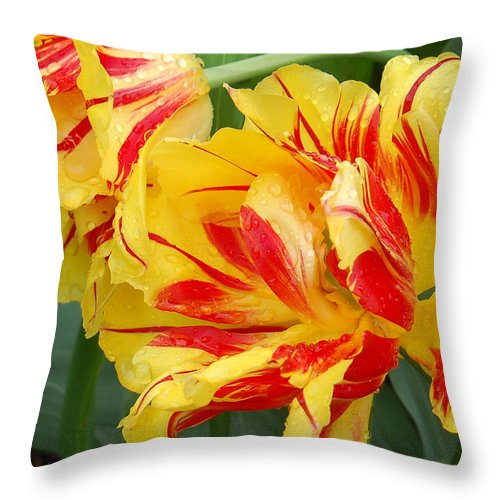 Red And Yellow Tulip Throw Pillow featuring the photograph Cinco De Mayo by Suzanne Gaff