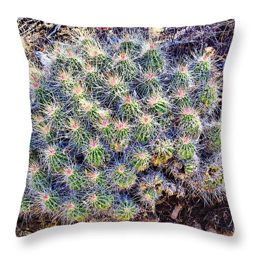 Claret Cup Cactus Throw Pillow featuring the photograph Claret Cup Cactus by Gary Richards
