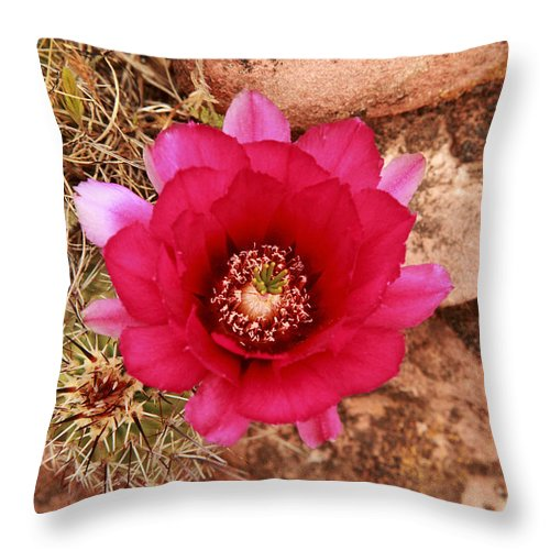 Cactus Throw Pillow featuring the photograph Claret Cup Cactus On Red Rock In Sedona by Alan Vance Ley