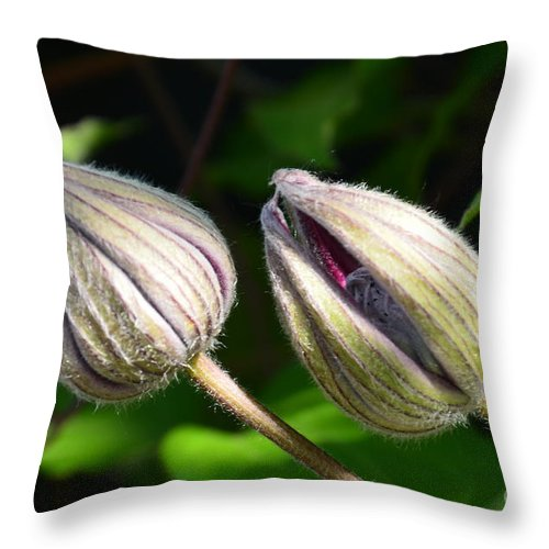 Clematis Throw Pillow featuring the photograph Clematis Buds by Randy J Heath