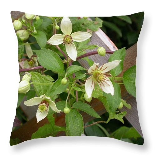 Throw Pillow featuring the photograph Clematis Grace by Cynthia Wallentine