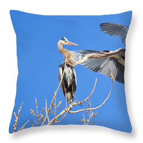Hawks/birds Throw Pillow featuring the photograph Close Call by Jim Garrison