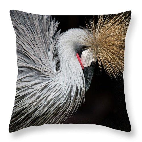 Tranquility Throw Pillow featuring the photograph Close Portrait Of A Grey Crowned Crane by © Santiago Urquijo