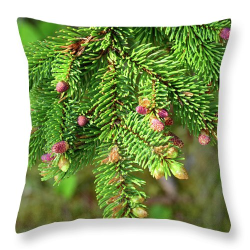 Day Throw Pillow featuring the photograph Close Up Of A Balsam Fir Branch by Darlyne A. Murawski