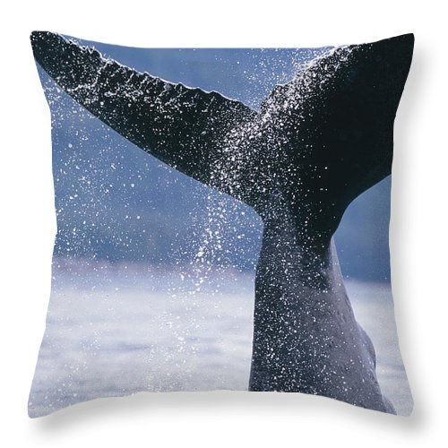 Coast Throw Pillow featuring the photograph Close Up Of A Humpback Whale Fluke In by Tom Soucek