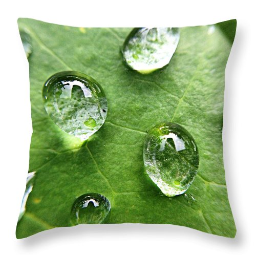 Douglasville Throw Pillow featuring the photograph Close-up Of Water Drops On Leaf by Brian Harrison / Eyeem