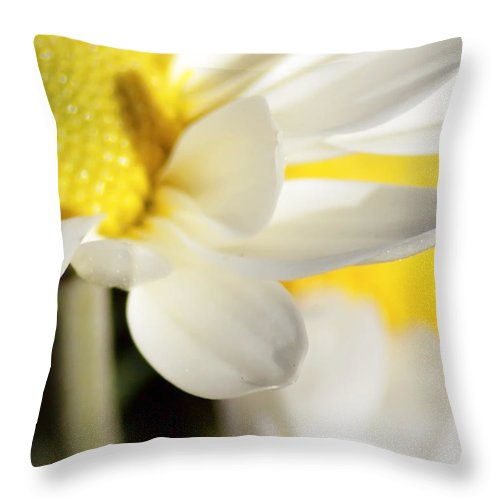 White Throw Pillow featuring the photograph Close Up Of White Daisy by Alex Grichenko