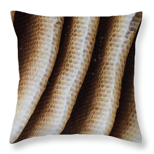 Amber Throw Pillow featuring the photograph Close-up Of Wild Honey Bee Combs by Deb Fedeler