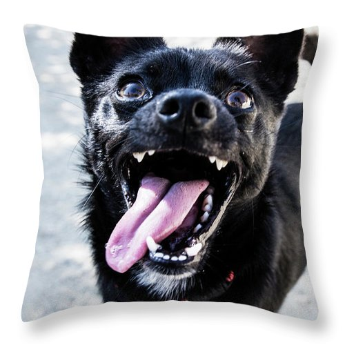 Pets Throw Pillow featuring the photograph Close-up Shot Of A Little Black Dog - by Amandafoundation.org