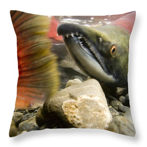 Day Throw Pillow featuring the photograph Close Up Underwater View Of Sockeye Red by Doug Demarest