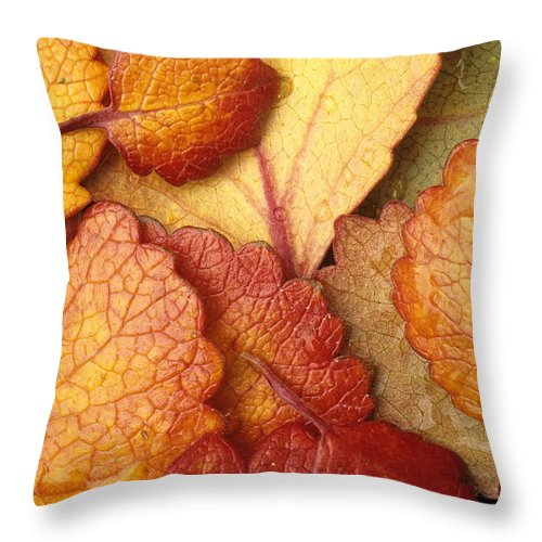 Pattern Throw Pillow featuring the photograph Closeup Of Dwarf Birch Leaves Autumn Ar by Jim Barr