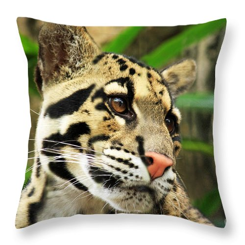 Clouded Throw Pillow featuring the photograph Clouded Leopard Face by Terri Mills